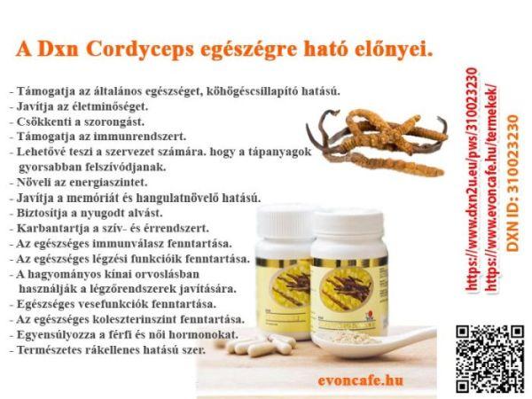 A Cordyceps gyógygomba egy igazi kincs